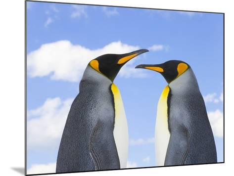 King Penguins-John Eastcott & Yva Momatiuk-Mounted Photographic Print