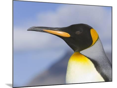 King Penguin-John Eastcott & Yva Momatiuk-Mounted Photographic Print