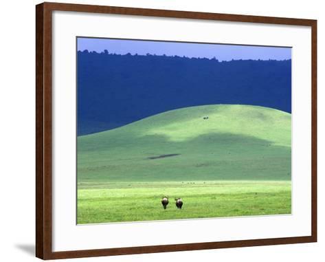 Wildebeest on Grassland in Ngorongoro Crater-Tibor Bogn?r-Framed Art Print