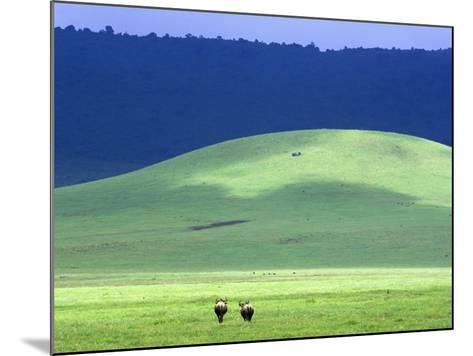 Wildebeest on Grassland in Ngorongoro Crater-Tibor Bogn?r-Mounted Photographic Print
