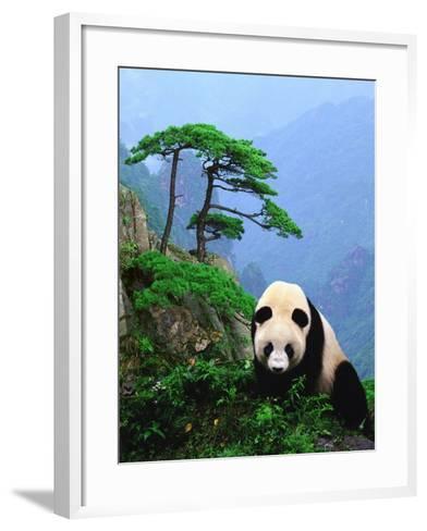 Giant Panda--Framed Art Print