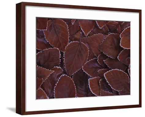 Frost-Edged Leaves-Philip James Corwin-Framed Art Print