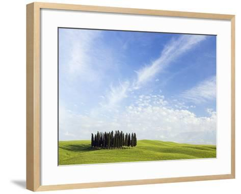 Stand of Cypress Trees in Meadow-Frank Lukasseck-Framed Art Print