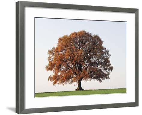Oak Tree in Autumn-Frank Lukasseck-Framed Art Print