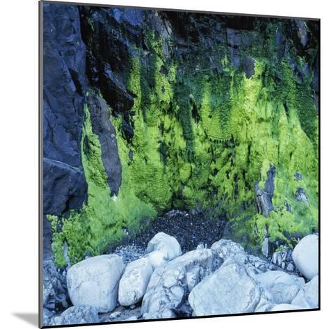 Algae Growing on Rock Cliff-Micha Pawlitzki-Mounted Photographic Print