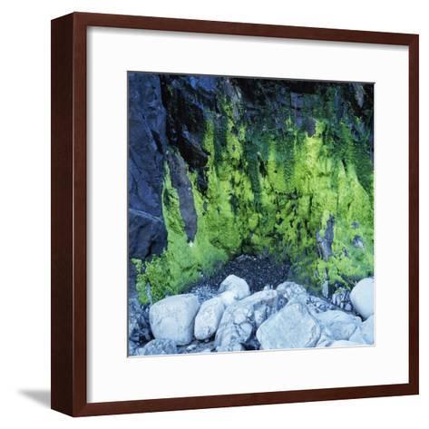 Algae Growing on Rock Cliff-Micha Pawlitzki-Framed Art Print