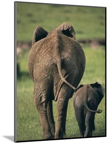 Adult Elephant and Baby--Mounted Photographic Print
