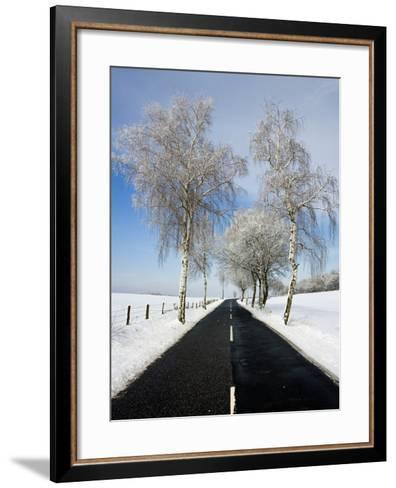 Birch Trees on Side of Road in Winter-Frank Lukasseck-Framed Art Print
