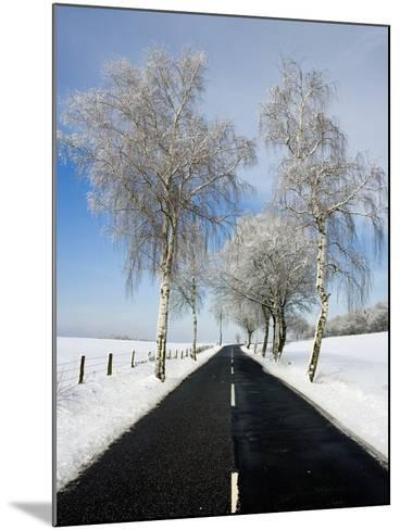 Birch Trees on Side of Road in Winter-Frank Lukasseck-Mounted Photographic Print