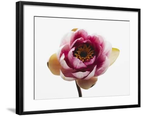 Water lily--Framed Art Print