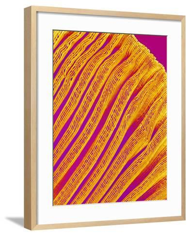 Freshwater Clam Gills-Micro Discovery-Framed Art Print