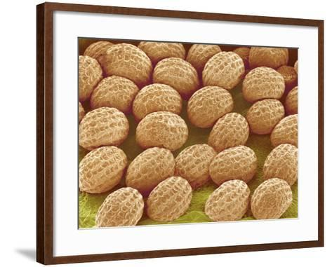 Freesia Flower Ovules-Micro Discovery-Framed Art Print