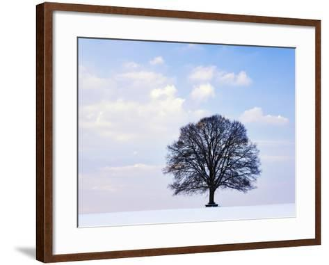 Oak Tree in Winter-Frank Lukasseck-Framed Art Print