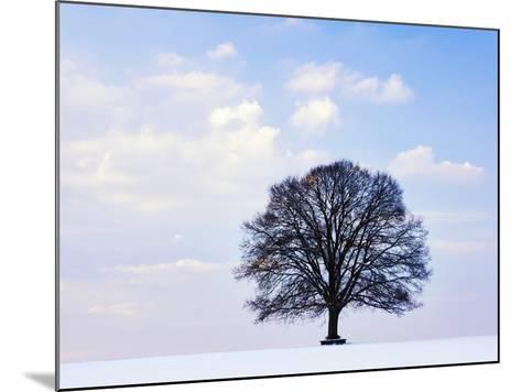 Oak Tree in Winter-Frank Lukasseck-Mounted Photographic Print