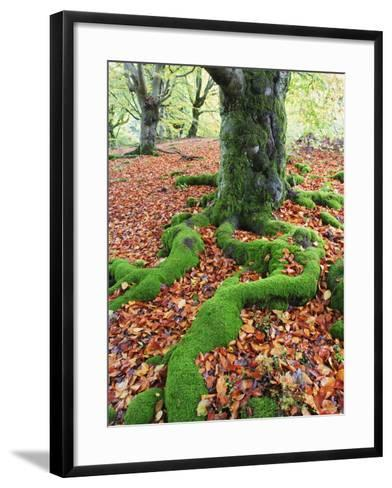 Moss Covered Roots Surrounded by Leaves-Frank Lukasseck-Framed Art Print