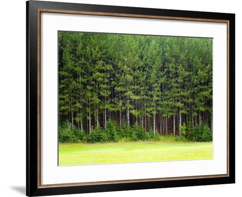 Forest Edge-Jim Craigmyle-Framed Art Print