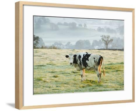 Friesen Cow Standing in Pasture-Ashley Cooper-Framed Art Print