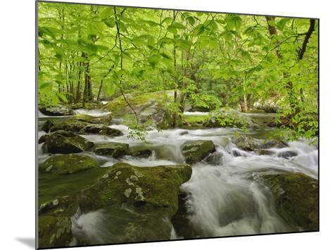 Middle Prong of the Little River-William Manning-Mounted Photographic Print
