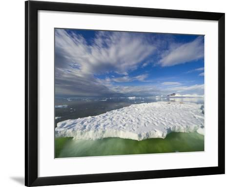 Crabeater Seals on Ice Floe at Holtedehl Bay-John Eastcott & Yva Momatiuk-Framed Art Print