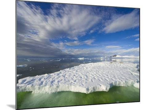 Crabeater Seals on Ice Floe at Holtedehl Bay-John Eastcott & Yva Momatiuk-Mounted Photographic Print