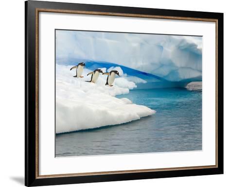 Gentoo Penguins Contemplating Jumping into Gerlache Strait-John Eastcott & Yva Momatiuk-Framed Art Print