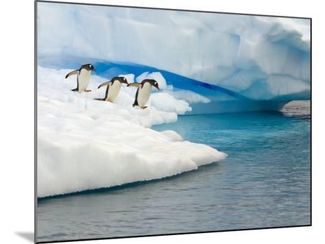 Gentoo Penguins Contemplating Jumping into Gerlache Strait-John Eastcott & Yva Momatiuk-Mounted Photographic Print