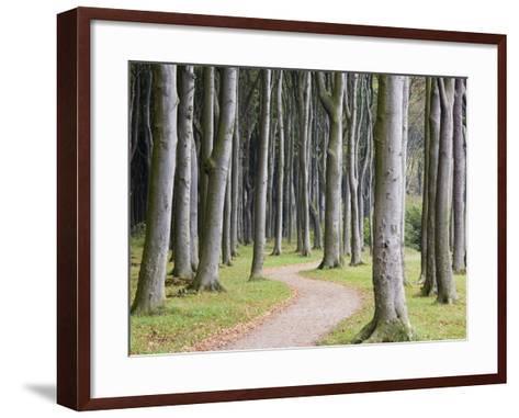 Beech Forest on the Baltic Coast-Frank Lukasseck-Framed Art Print
