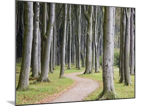 Beech Forest on the Baltic Coast-Frank Lukasseck-Mounted Photographic Print
