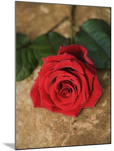 Single Red Rose on Stone Floor-Clive Nichols-Mounted Photographic Print