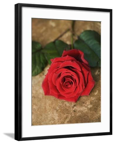 Single Red Rose on Stone Floor-Clive Nichols-Framed Art Print