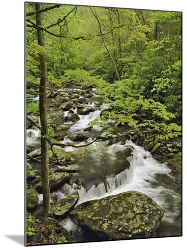 Middle Prong of the Little Pigeon River Cascading over Rocks-William Manning-Mounted Photographic Print