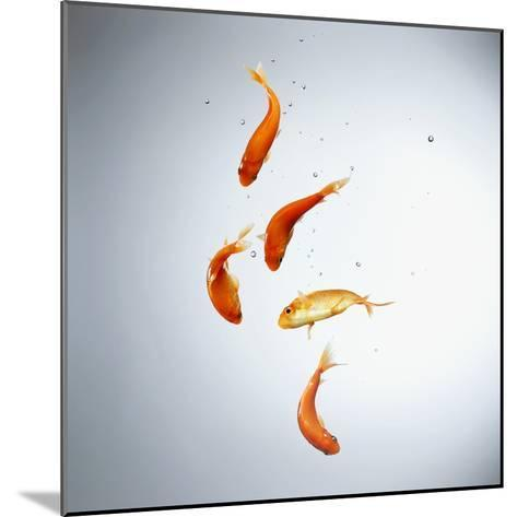 Five goldfish swimming with bubbles--Mounted Photographic Print