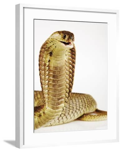 Snouted Cobra-Martin Harvey-Framed Art Print