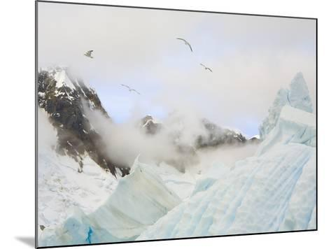 Gulls Flying Above Stranded Icebergs at Boothe Island-John Eastcott & Yva Momatiuk-Mounted Photographic Print