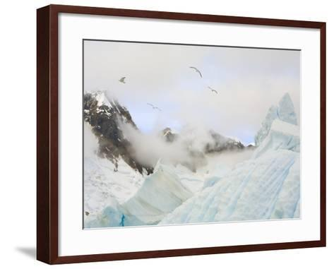 Gulls Flying Above Stranded Icebergs at Boothe Island-John Eastcott & Yva Momatiuk-Framed Art Print