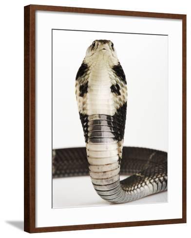 Chinese Cobra-Martin Harvey-Framed Art Print