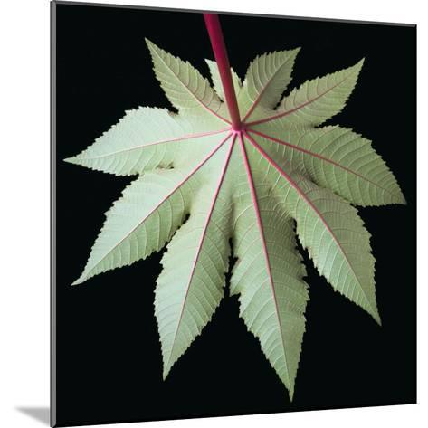 Leaf and Stem-Tim Mcguire-Mounted Photographic Print