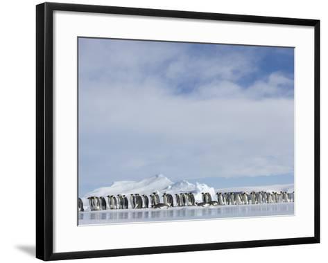 Row of Emperor Penguins in Antarctica-Paul Souders-Framed Art Print