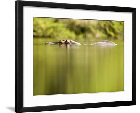 Hippopotamus Submerged in Natural Pool-Paul Souders-Framed Art Print