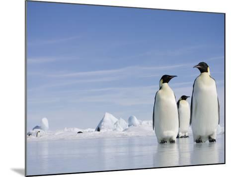 Emperor Penguins in Antarctica-Paul Souders-Mounted Photographic Print