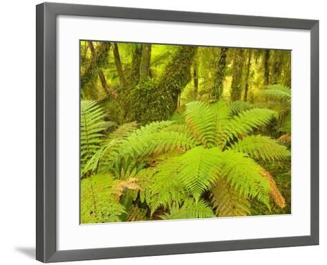 Forest on West Coast of New Zealand's South Island-John Eastcott & Yva Momatiuk-Framed Art Print