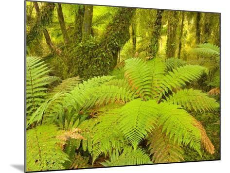 Forest on West Coast of New Zealand's South Island-John Eastcott & Yva Momatiuk-Mounted Photographic Print