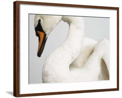 Mounted Swan-J^ James-Framed Art Print