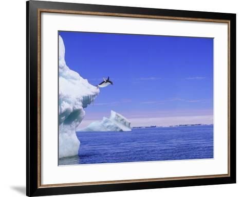 Adelie Penguin Jumping From Iceberg--Framed Art Print
