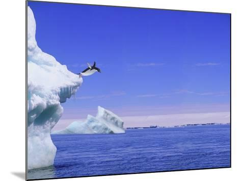 Adelie Penguin Jumping From Iceberg--Mounted Photographic Print