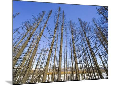 Forest After Fire-John Eastcott & Yva Momatiuk-Mounted Photographic Print