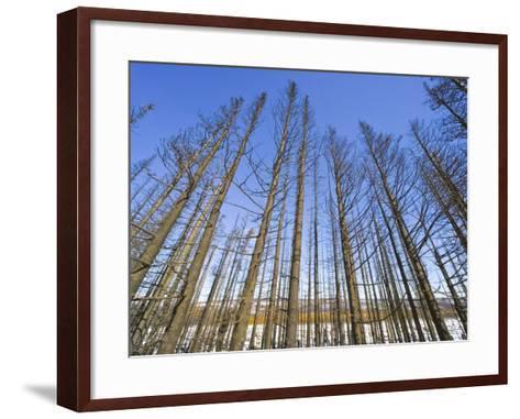 Forest After Fire-John Eastcott & Yva Momatiuk-Framed Art Print