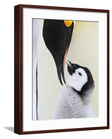 Emperor Penguin and Chick-Frank Lukasseck-Framed Art Print