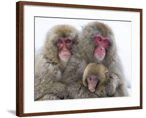Japanese Macaque Family-Frank Lukasseck-Framed Art Print