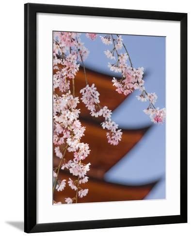 Cherry Blossoms at Itsukushima Jinja Shrine-Rudy Sulgan-Framed Art Print